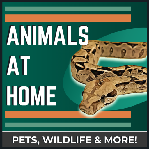 BONUS: Can Small Snakes Thrive In Large Cages? The Animals At Home